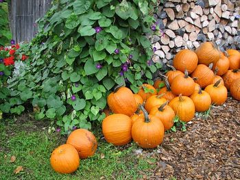 Статусы про осень